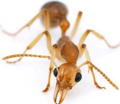 Уничтожение муравьев Москва